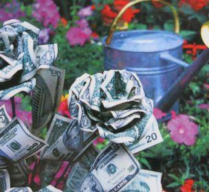 tending_your_money_garden